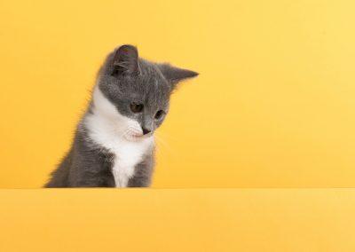 Launch of a new cat litter pack