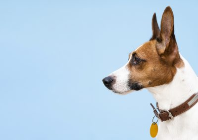 A white paper on the pet industry.